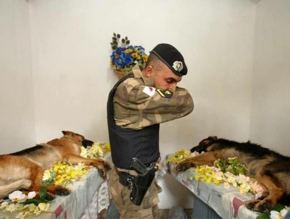 Troops and dogs 18