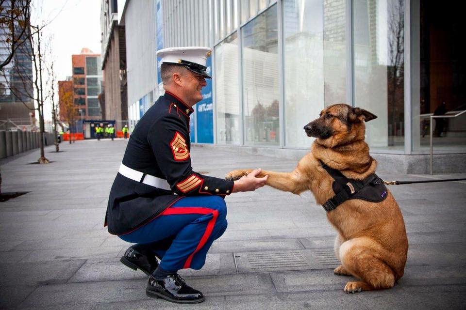 "Gunnery Sgt. Leroy Jethro Gibb: ""That's not a dog; that's a Marine!"""