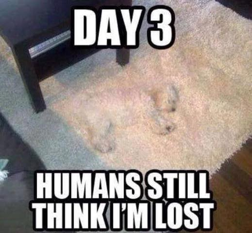 Day 3 Humans still think I'm lost