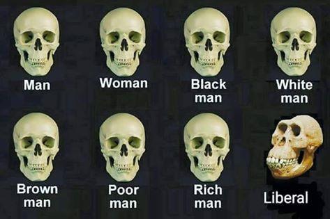 Stupid liberals skulls