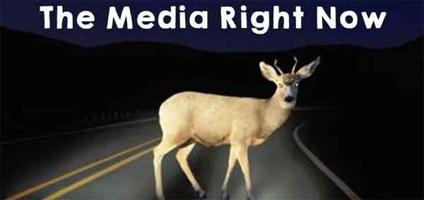 media-deer-in-headlights