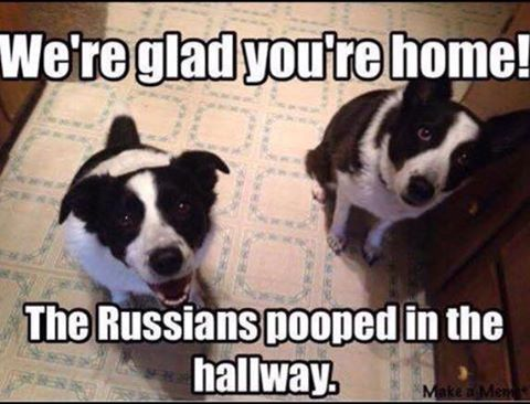 silly-dogs-russians-pooped-in-hallway