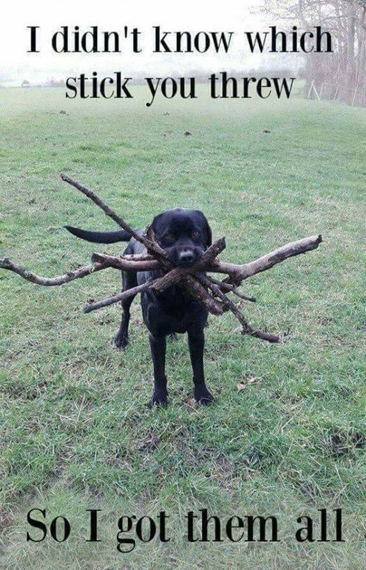 silly-dog-gets-all-sticks