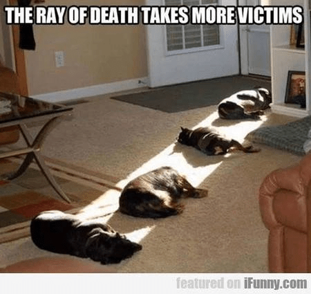 silly-ray-of-death-sun-makes-animals-sleep