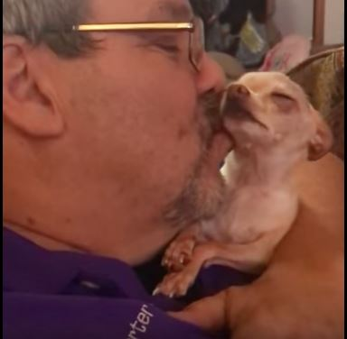Chihuahuas love their owners