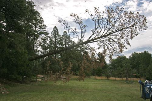 Obama scandal tree falling makes no sound
