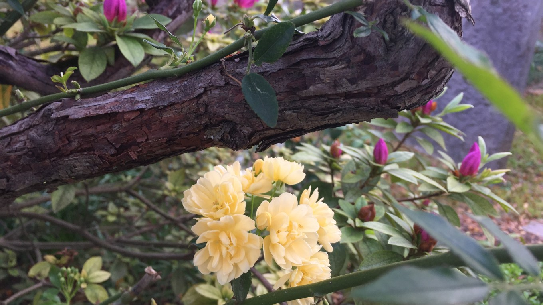 Charleston flowers