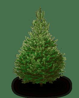Boomaanhuis.nl Nordmann Kerstboom Gratis Thuisbezorgd
