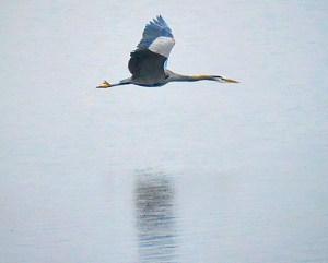 BIRD WHISPERER OF TUALATIN NATIONAL WILDLIFE REFUGE