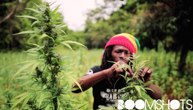 "WATCH THIS: Jesse Royal ""Gimme Likkle Herb / Finally"" Official Music Video"