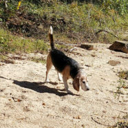 highway-31-landing-oklahoma-pet-friendly