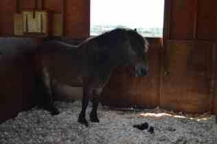 Redwings Horse Sanctuary A