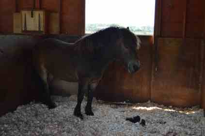 Redwings Horse Sanctuary A