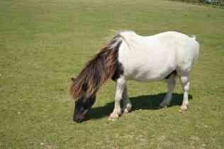 Redwings Horse Sanctuary B