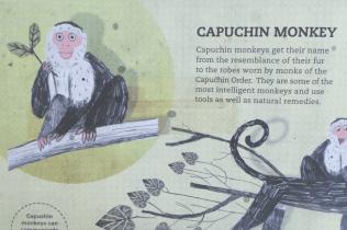 Animal Doctors - Capuchin Monkey