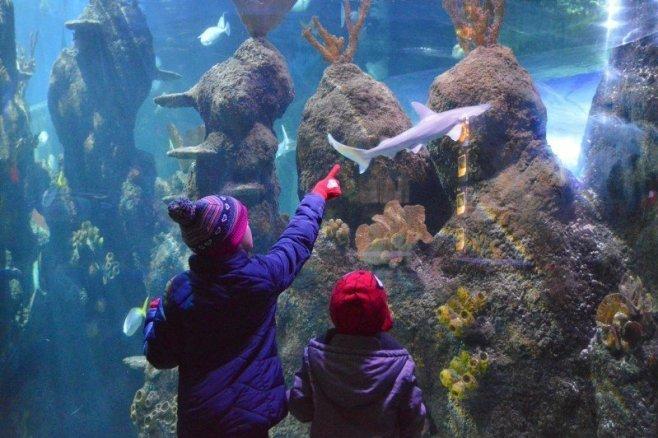 chessington-winters-tail-sealife-centre