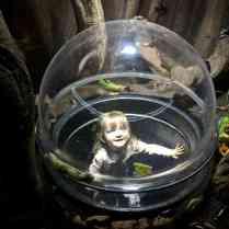 SEA LIFE London Rainforest Adventure Piglet