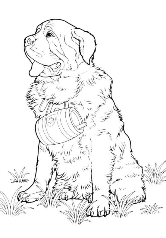 Cani Da Colorare San Bernardo da stampare e colorare