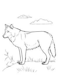 Cani Da Colorare Siberian Husky da stampare e colorare