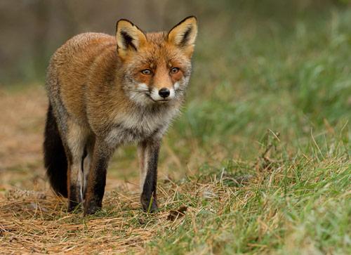 30 Amazing Pictures of Animals
