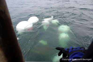 Unter Wasser Schleppen der Riva Super Aquarama in den Hafen für die Bergung durch die Bootswerft Baumgart