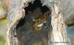 frog in a log 1