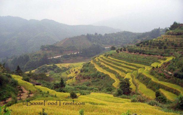 Fujian Rice Terrace
