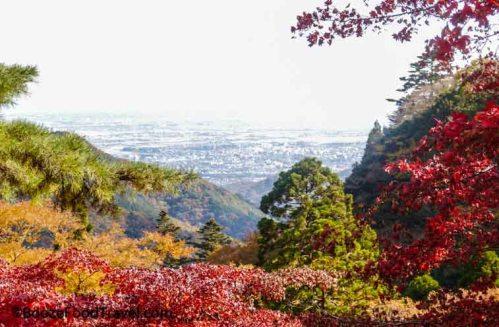 mt oyama foliage