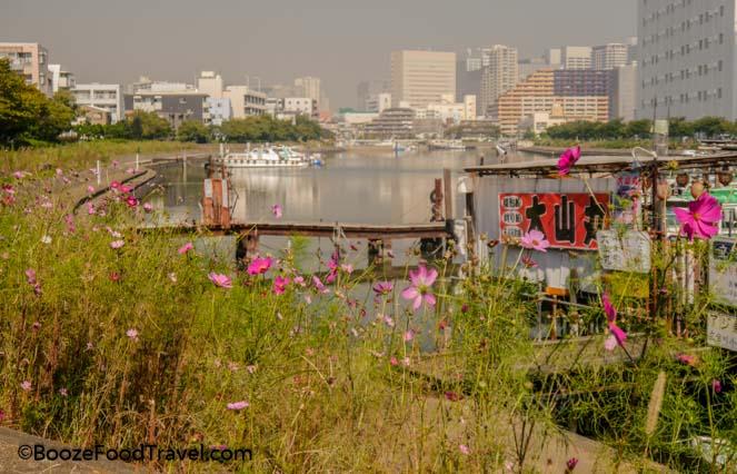 Shinagawa wildflowers