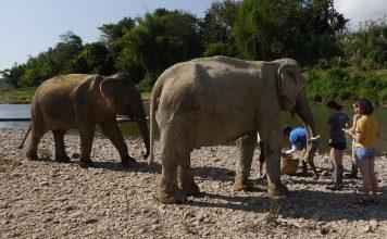 mandalao elephant sanctuary