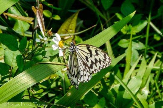yehliu butterfly