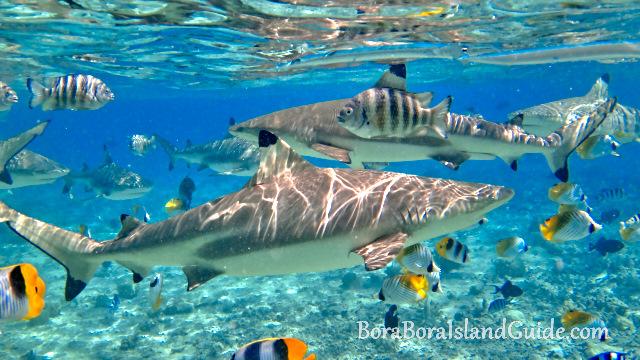Image result for bora bora lagoon snorkeling