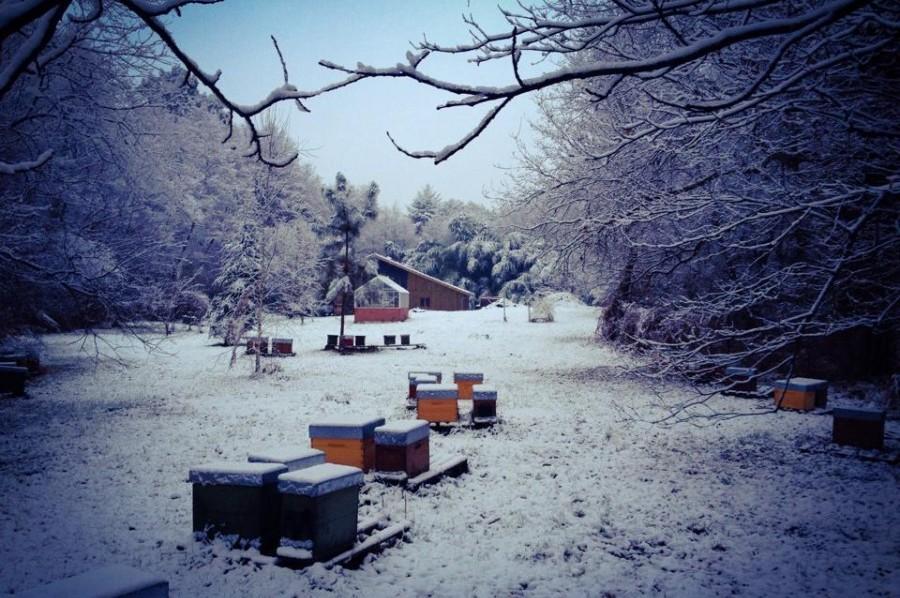 hivernage bio
