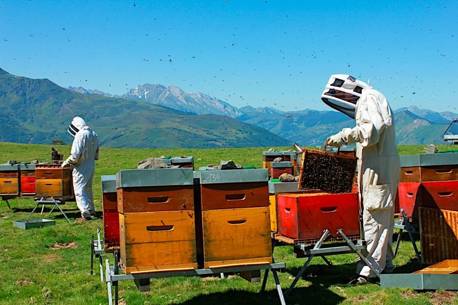 apiculteurs de la borda d'ambrosi