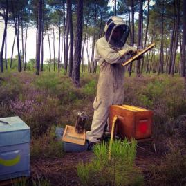 apiculteur bio