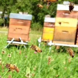 abeilles bio