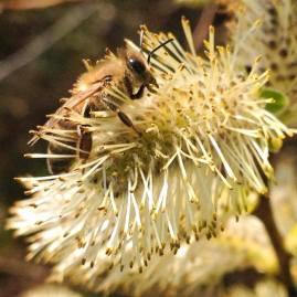 miel de printemps bio