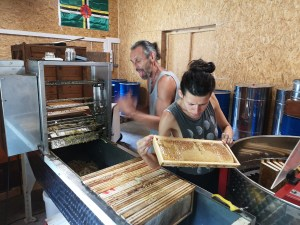 apiculture familiale