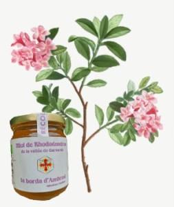 miel bio de rhododendron