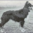 THE COLLIE The life story of the Collie is the history of pastoral life, for from the first day that man herded flocks he had a dog to help him. […]
