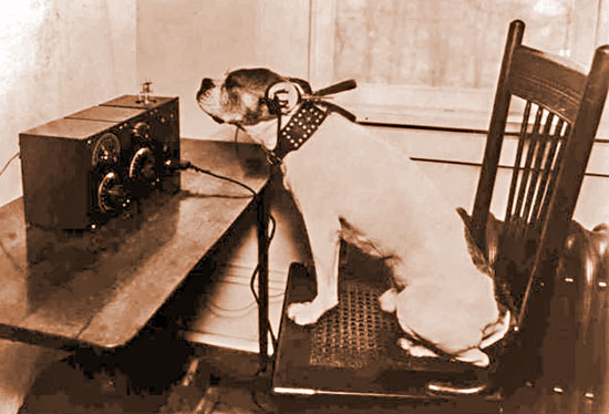 dog listening to a vintage radio