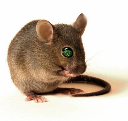 Those Inbred Lab Mice
