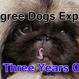 If you'd like to watch the newly released Pedigree Dogs Exposed: Three Years On by Jemima Harrison here in America, your best option is to purchase the DVD through the […]