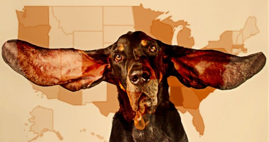 Black and Tan Coonhound over the USA