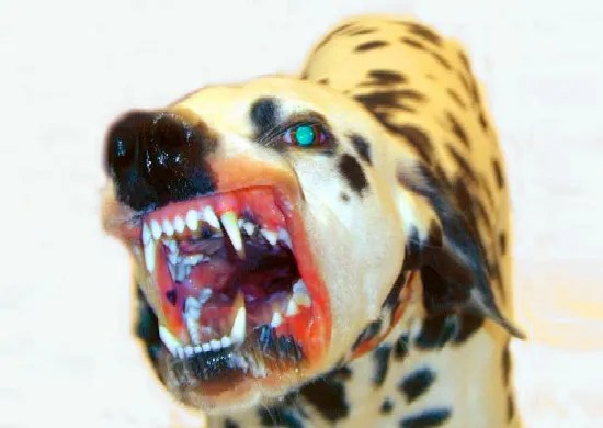 Dalmatian_aggression_bite