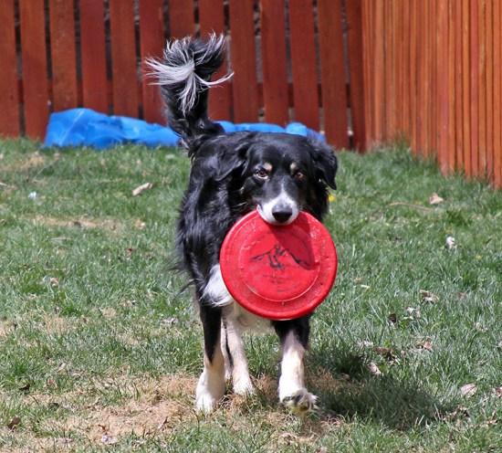 Dublin with a Frisbee