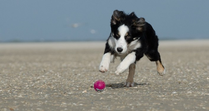 5-ways-to-stop-your-border-collie-from-nipping-2