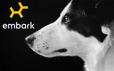 Embark dog DNA test for Border Collies