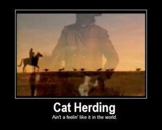 Herding_Cats.jpg