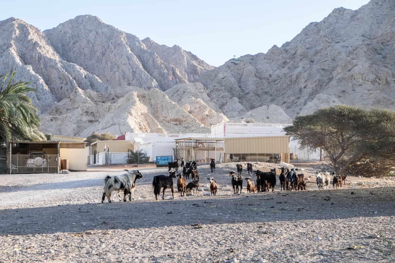 Qasr Al Zabba or 'Sheba's Palace' Ras Al Khaimah UAE